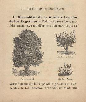 Bert, Paul. Ciencias naturales 4to grado: botánica, mineralogía, geología; traducido por Pablo A. Pizzurno. Buenos Aires: Lajouane, 1890.